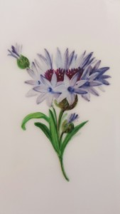 A hand painted flower from one of my great-grandparents' KPM plates, 1870.